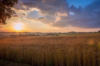 Zeit für Klarheit und Ernte: Ein Ritual zum Schnitterinnenfest 3