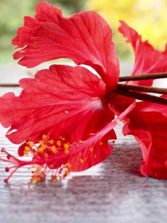 Keine Angst vor Kilos: Wiegen als spirituelle Praxis