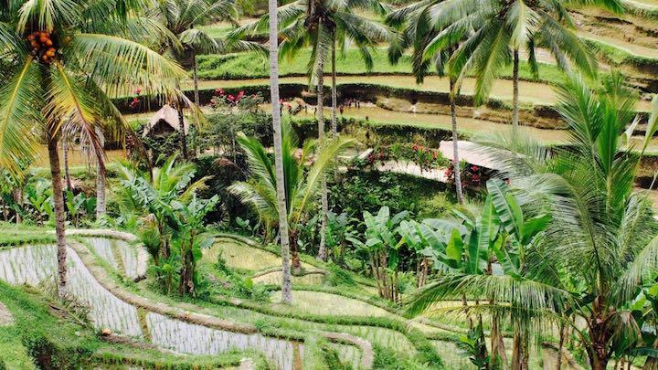 Die Insel der Götter: Tipps für deinen Yoga-Urlaub auf Bali 5