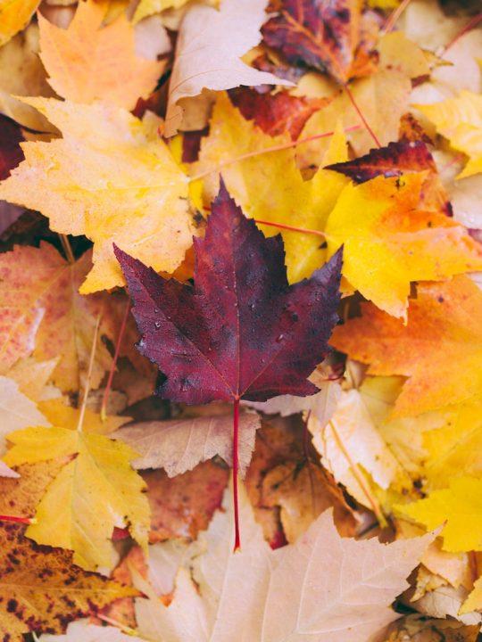 Tag- und Nachtgleiche am 23.9.: So zelebrierst du den Herbstanfang 1