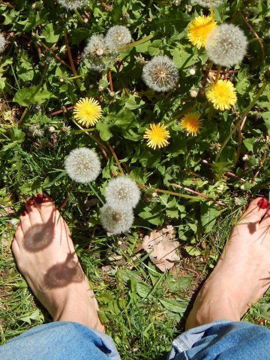 Green Guru - So entwickelst du deine spirituelle Pflanzenpraxis