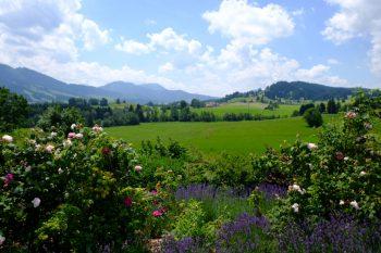 Von Rosengärten und Bergkristallen: Zu Besuch bei Primavera 14