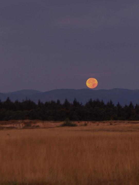 Moonvibes November: Vollmond in Stier am 12.11.19