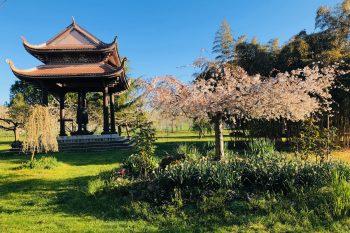Schweigen am Lotusteich: Eine Woche im Zen-Kloster mit meinem Vater 3