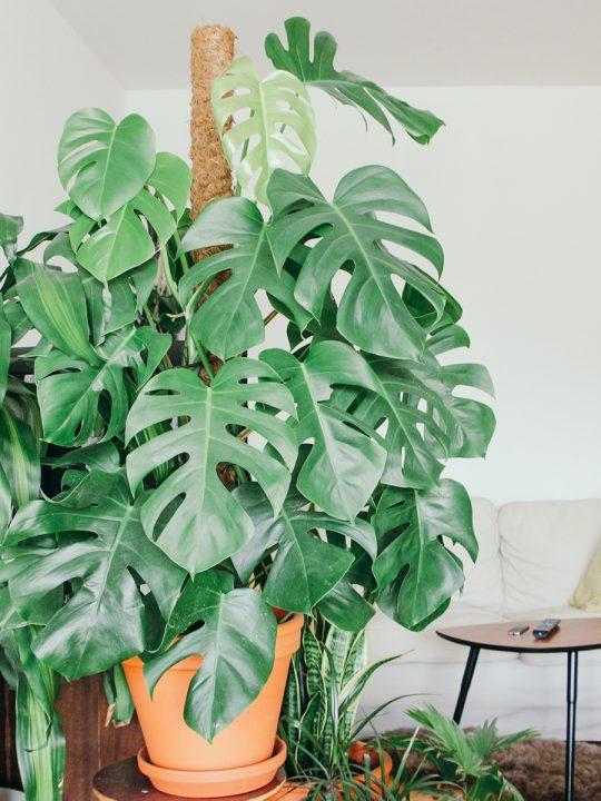 Green Home - So holst du dir Nachhaltigkeit in die eigenen vier Wände 11