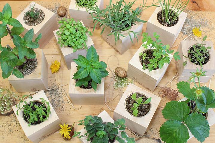 Green Home - So holst du dir Nachhaltigkeit in die eigenen vier Wände 1