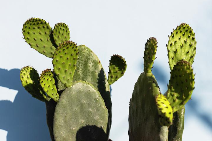 Wasser aus der Wüste: Die neue Weleda Feigenkaktus Feuchtigkeitspflege 9