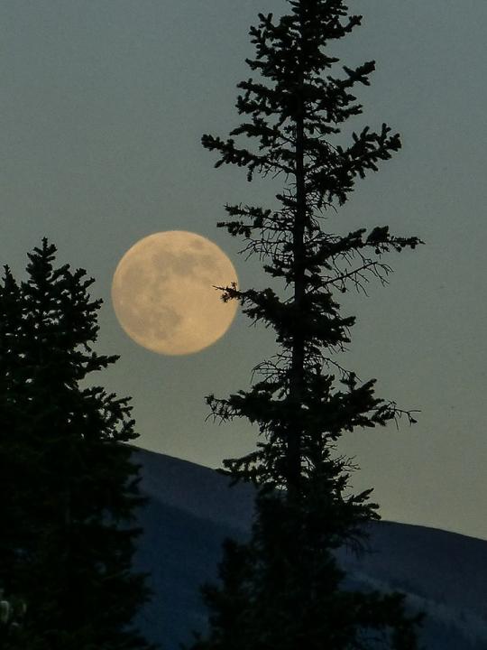 Moonvibes Oktober: Vollmond in Widder am 01.10.