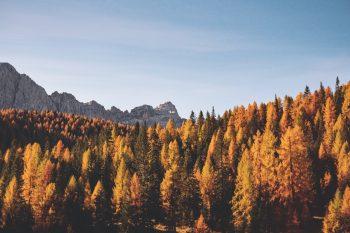 Ayurvedisch gut durch den Herbst: Die besten Tipps und Tricks 5