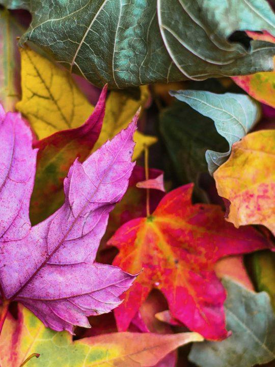 Samhain am 31.10.2021: So feierst du das keltische Neujahrsfest